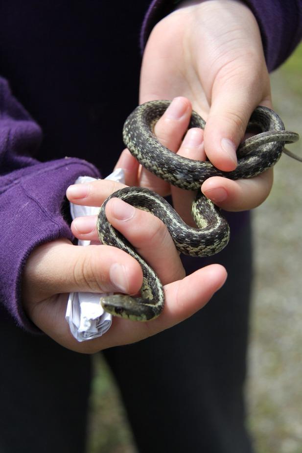 snake-1024737_1280(1)