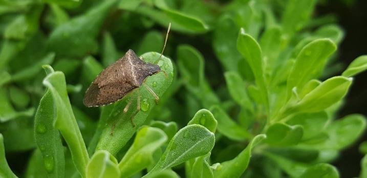 bug-1436910_1280