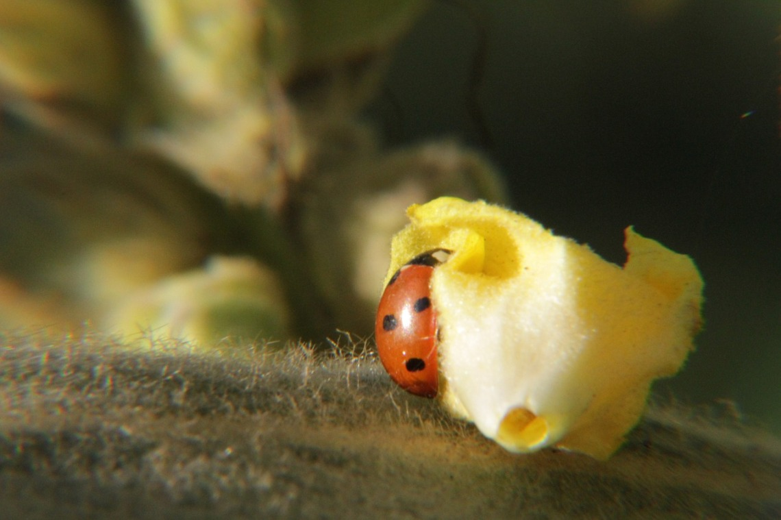 ladybug-196297_1280(1)