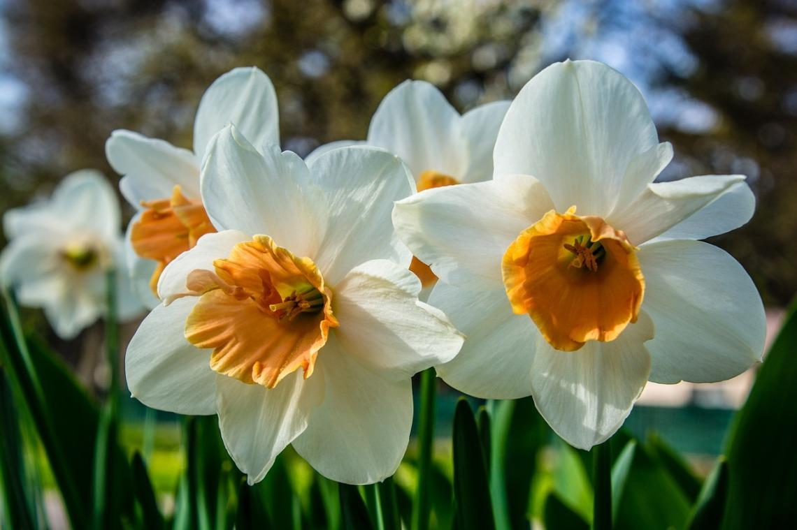 blossom-1329557_1280