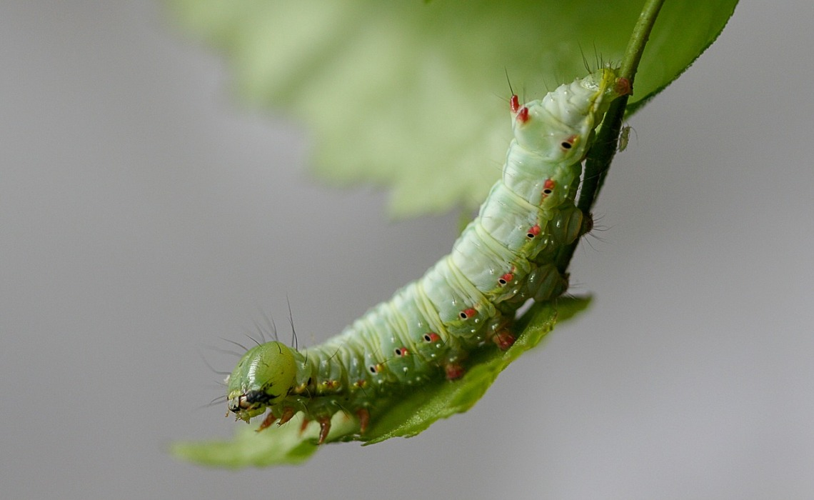 caterpillar-4050161_1280