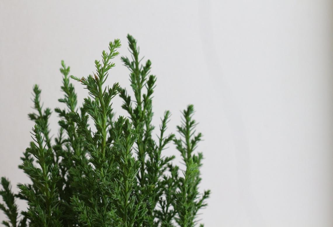 greens-2577721_1280