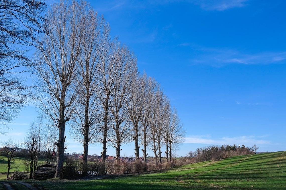 poplars-4080638_1280