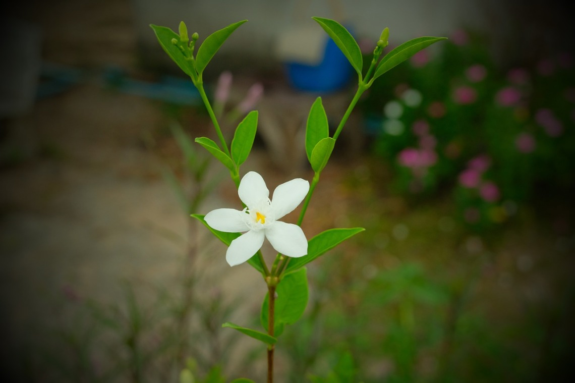 flower-4433465_1280
