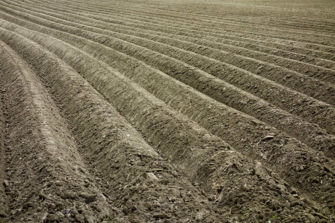 agriculture-4008743_1280