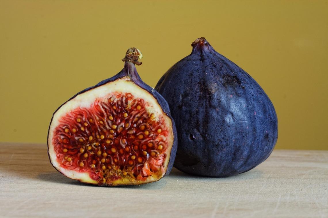 figs-2619978_1280